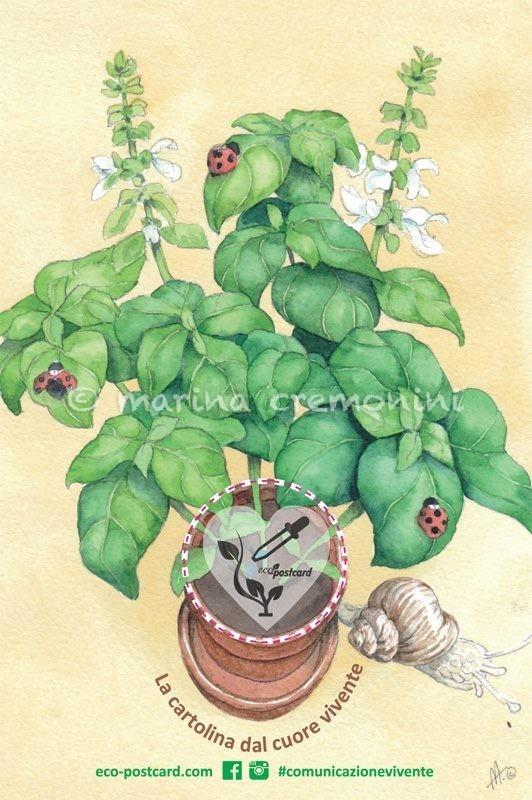 basil in watercolor