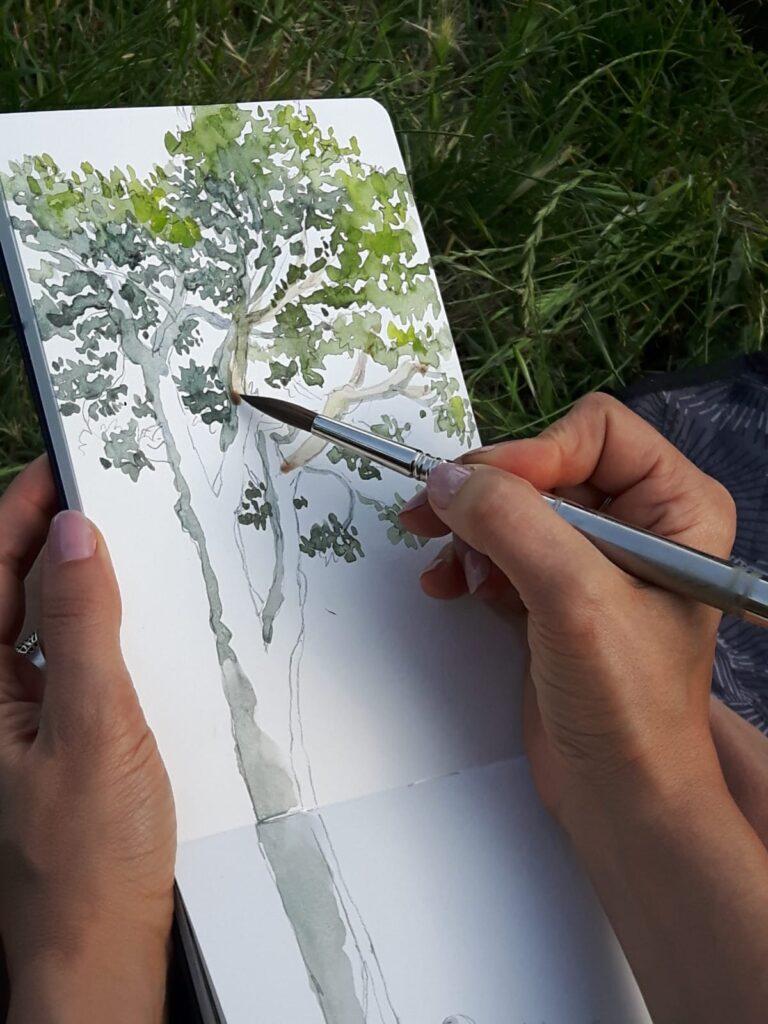 acquerello del pino di Ronzano