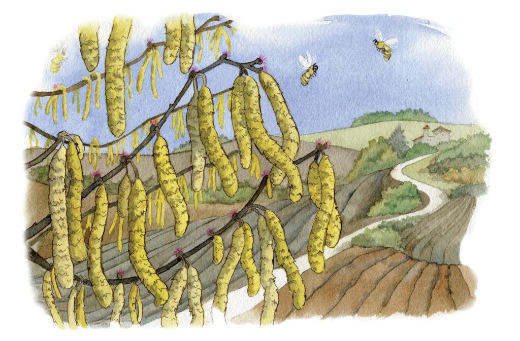aziende virtuose verso le api